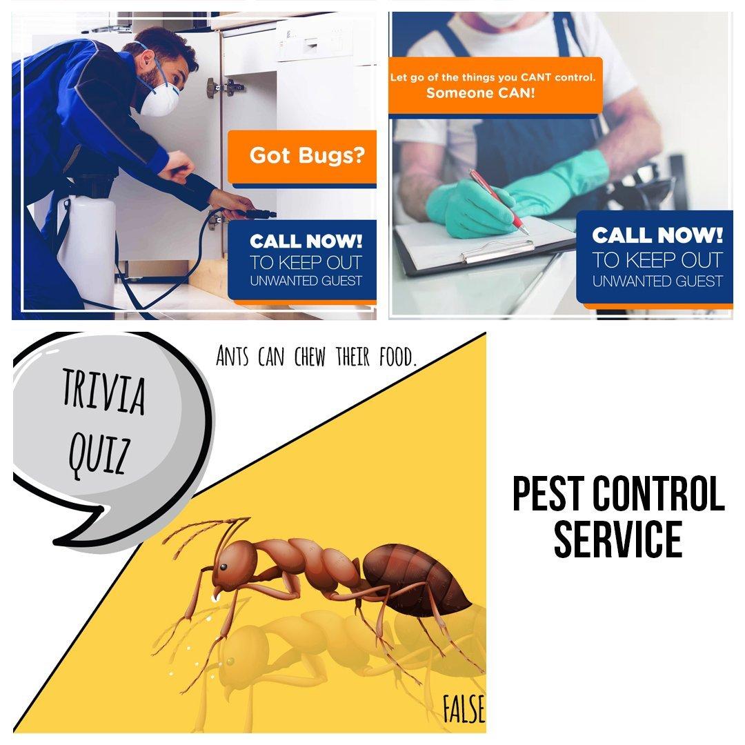 Pest Control Sneak Peak